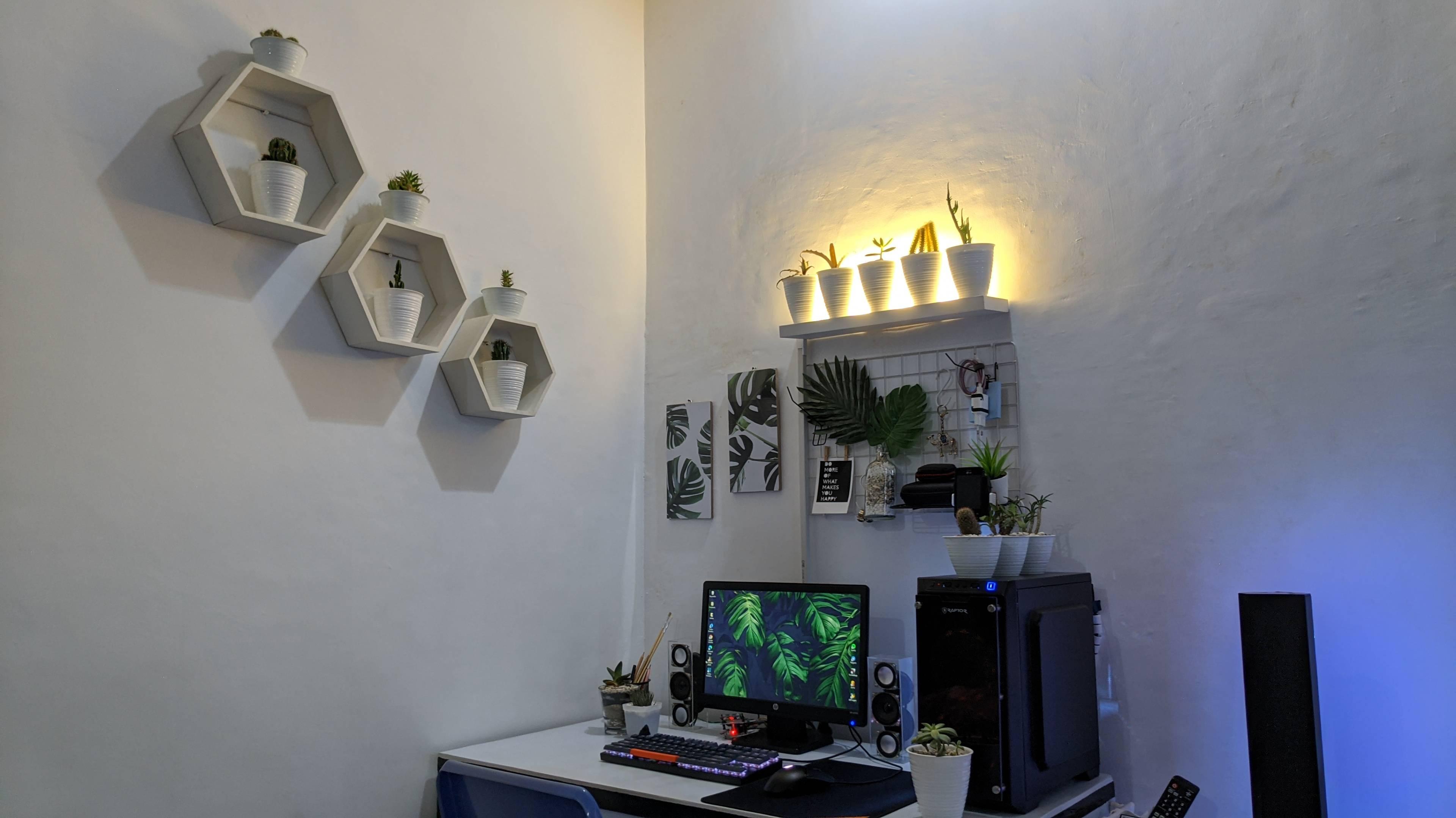 norfayoga's Setup - Minimalist plant setup | Scooget